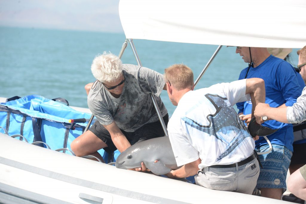 Vaquita Porpoise Catch and Release